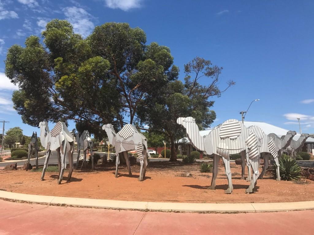 Norseman, Camels