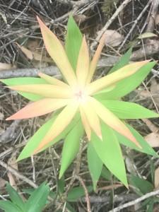 Plant, Walpole WA