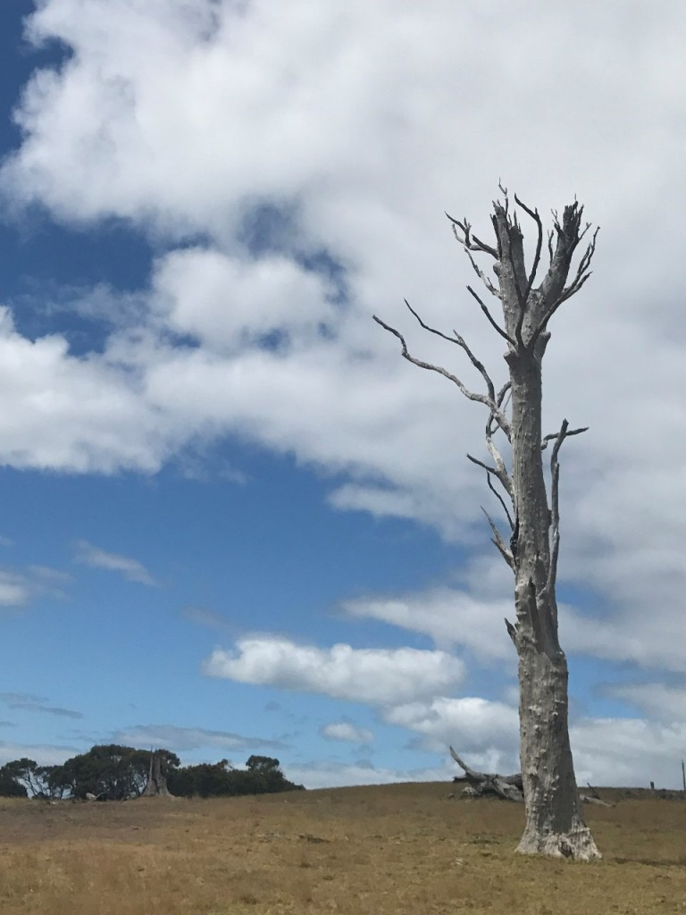 Tree near Cape Howe National Park