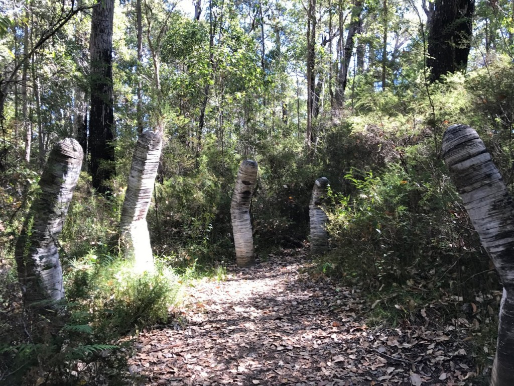 Sculpture on the 'Understory' walk in Northcliffe WA