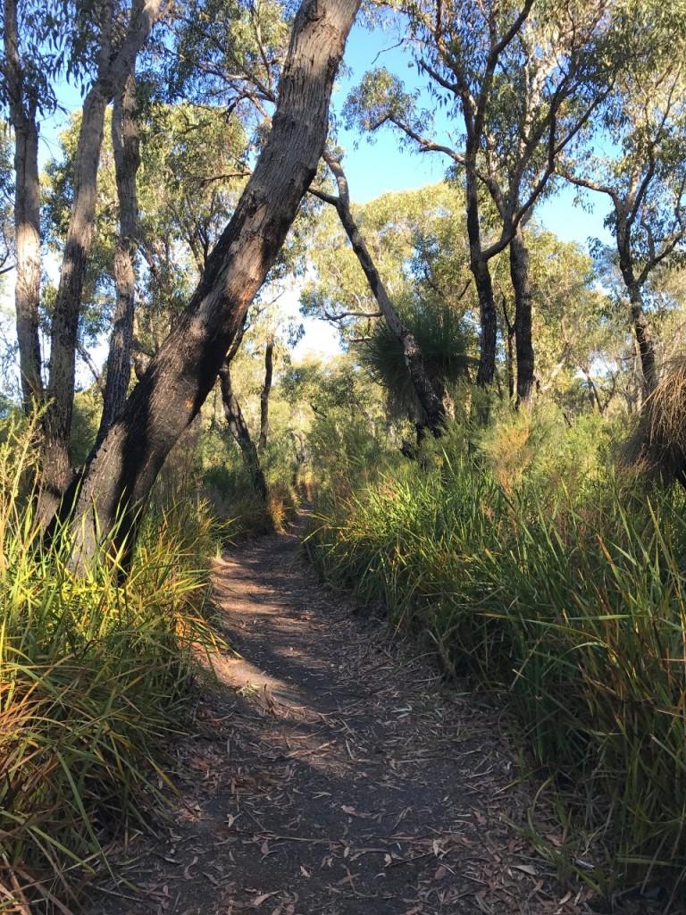 Short Bush Walk, Sid's Campground, Northcliffe WA