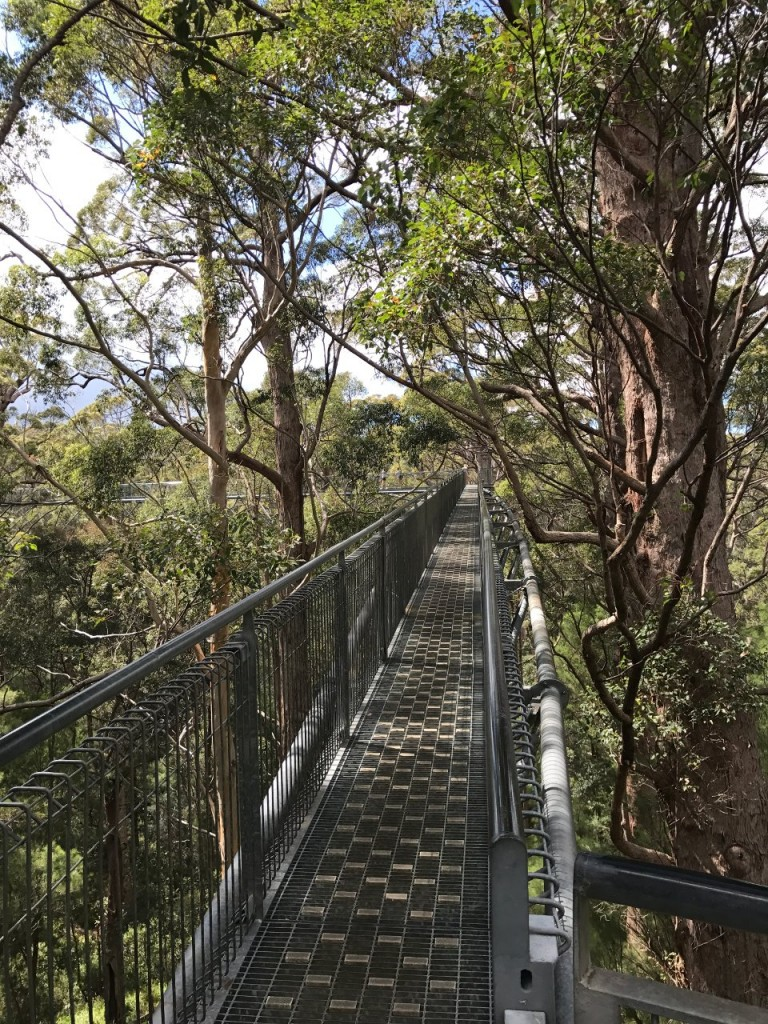 Tree Top Walk, Valley of the Giants, Nornalup WA