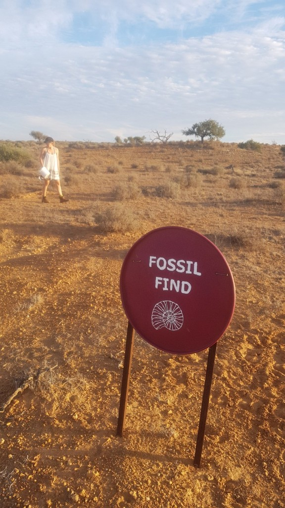 Fossil Hunting Giralia Station WA