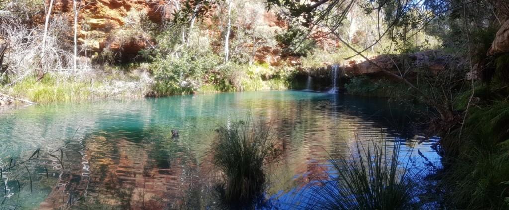 Fern Pool, Dales Gorge, Karijini National Park WA