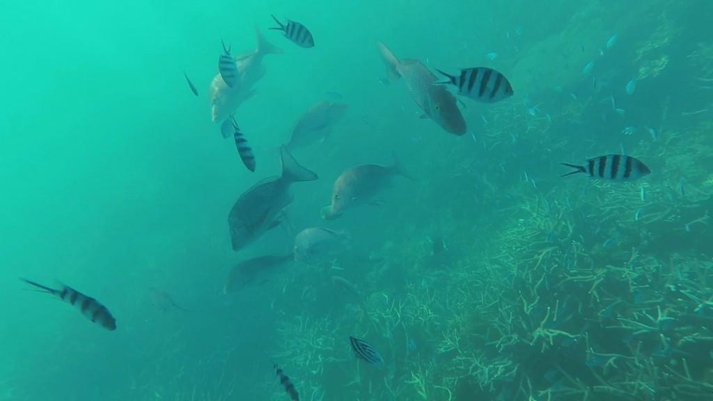 Fish, Coral Bay WA