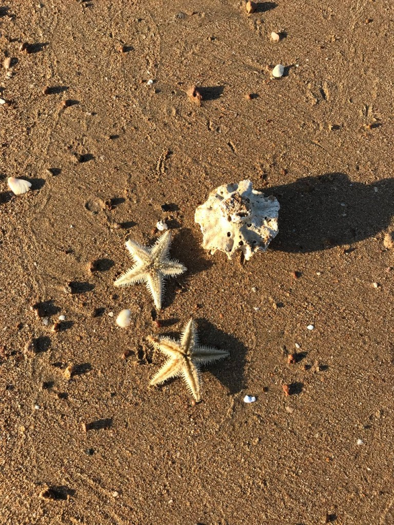 Starfish, Giralia Station WA