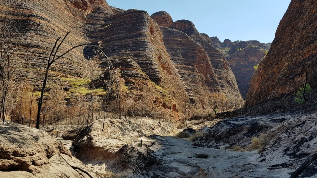 Burnt section on the walk to Whipsnake Gorge, Bungle Bungles, Purnululu National Park WA