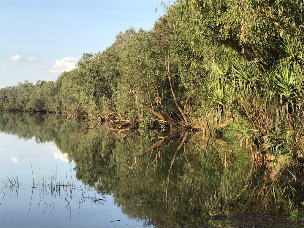 Tree reflections in the Katherine River, Manbulloo Station NT
