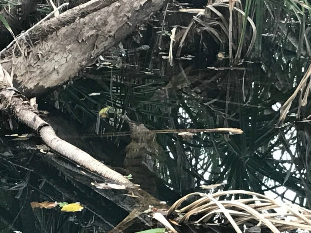 Spot the Croc, Timber Creek Caravan Park NT