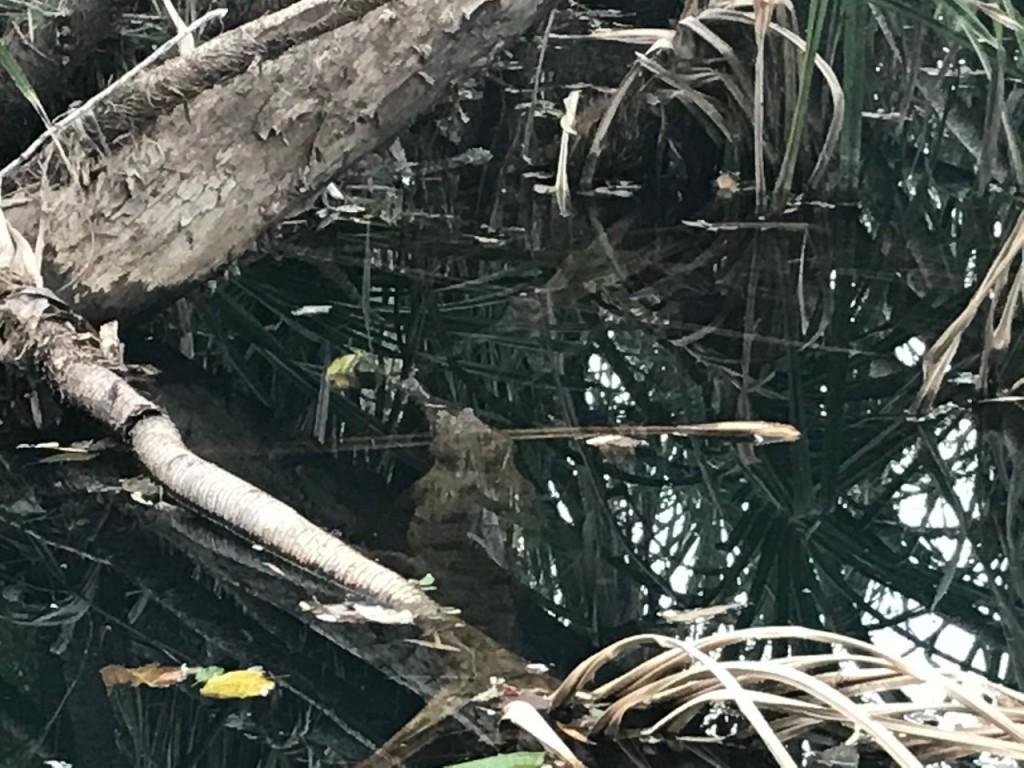 Spot the Croc, Timber Creek Caravan Park NT