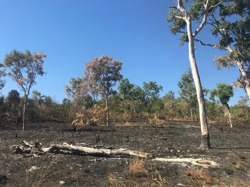 Burnt area still smoking on the Lee Point Walking Trail, Darwin NT