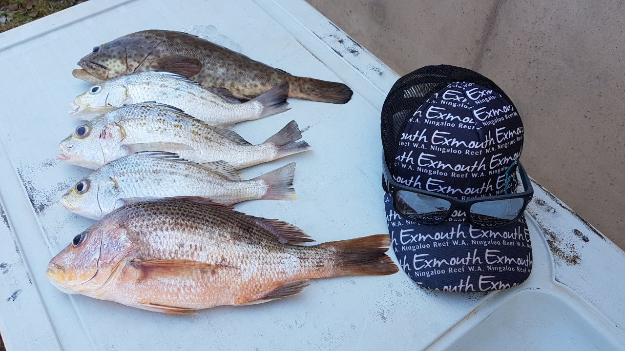 Our catch from Dundee Beach NT