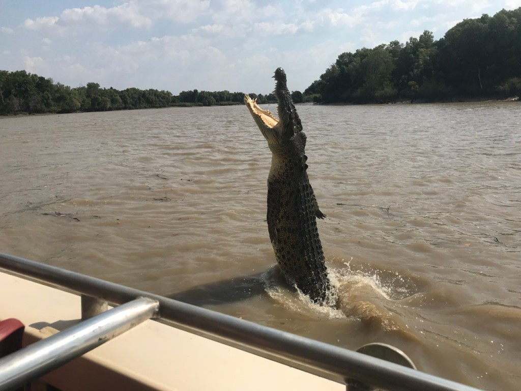 Jumping Croc, Adelaide River, Wak Wak NT